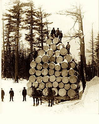 Illinois Forestry Association - Timber Sale Advice